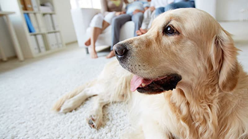Myrtle Beach South Carolina Pet Stain and Odor Removal